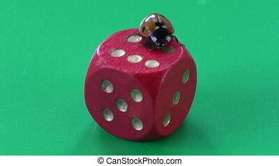 success concept %u2013 ladybug on dice