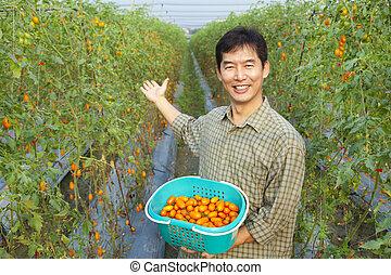 successful asian farmer holding tomato on his farm
