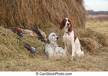 Successful bird shoot - Two Bird dog resting after the hunt ...