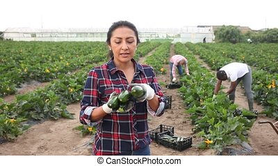 Successful colombian female farmer engaged in organic vegetables growing, showing harvest zucchini on farm field. High quality FullHD footage