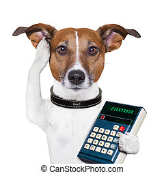 Successful dog accountant