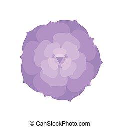 succulent cactus plant illustration, flat design vector