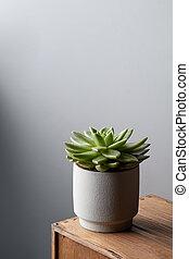 succulent, espace, bois, pot, mur, fond, table, blanc, copie