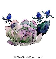 Succulent flower. Isolated flower illustration element. Background set. Watercolour drawing aquarelle bouquet.