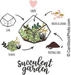 'Succulent garden' infographic