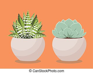 Succulent in a Pot - Popular houseplant succulent growing in...