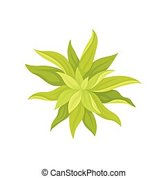 Succulent on white background. Vector flat illustration.