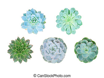 Set of succulent green plant isolated on white background