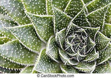 Succulent Pattern - Succulent pattern.
