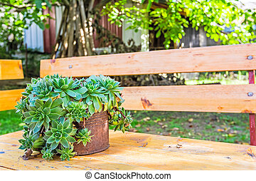 Succulent Plant Container Garden