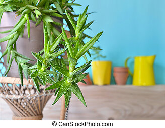 succulent plant in front of a blue wall wit garden decoration