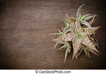 succulent plant on wooden background
