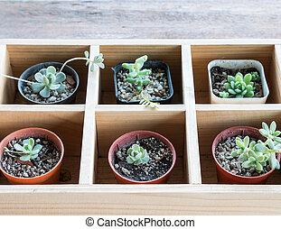 Succulent plant pot.