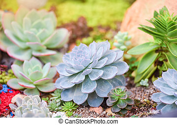 Succulent plant various types beautiful growing in the garden