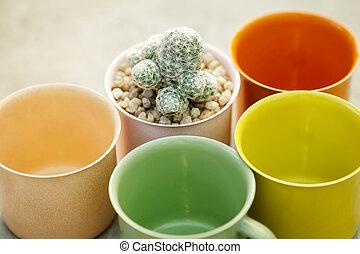 Succulent plant with colorful flowerpot