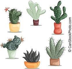 succulent, planten, en, cactussen, in, p