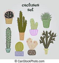 succulent, planten, en, cactussen