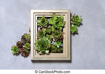 succulent plants decoration