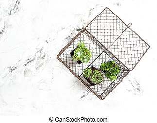 Succulent plants decoration white marble background copy space