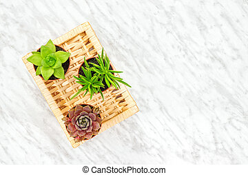 Succulent plants home decor on marble background
