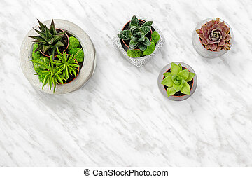 Succulent plants in concrete pots on marble background