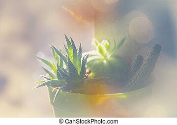 Succulent plants in exotic garden