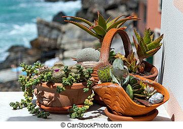 Succulent Plants in Pots - Liguria Italy