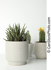 Succulent plants in pots on white background, space for text
