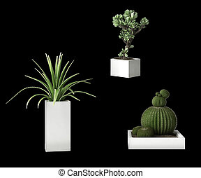 Succulent plants isolated on black background
