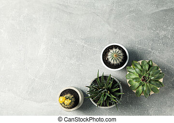 Succulent plants on grey background, top view. Houseplant