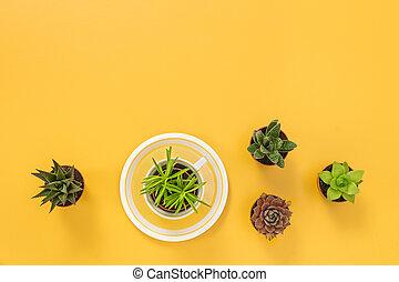 Succulent plants on joyful yellow background