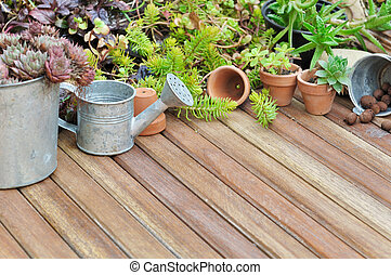 succulent plants on terrace - collection of succulent plant...