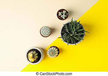 Succulent plants on two tone background, top view