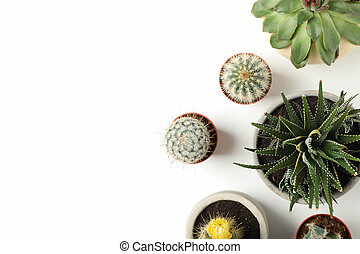 Succulent plants on white background, top view. Houseplant