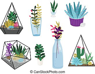 Succulent plants set