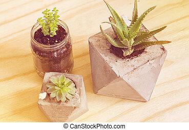 Succulent plants vintage filter