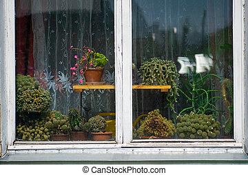 Succulent pot plant decoration on wooden window.