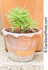 Succulent pot plant.