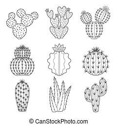 succulent, set, vector, cactus, omtrek, pictogram