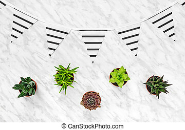 Succulents and stripped pennants on marble background