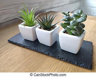 succulents, bois, lumière, pots, contre, mur, fond, table, brique blanche
