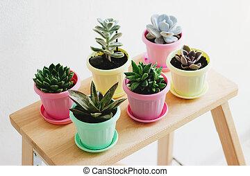 succulents, bois, shelf.