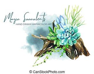 succulents, brillante, de madera, crecer, acuarela, nudo compuesto, olla