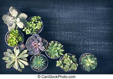 succulents, differente