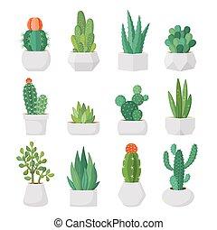 succulents, komplet, garnki, wektor, kaktus, rysunek
