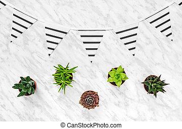 succulents, og, afklædt, pennants, på, marmor, baggrund