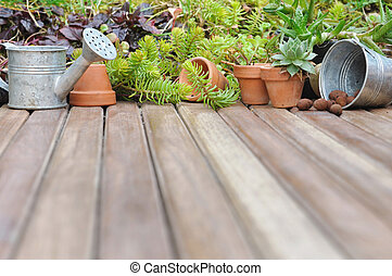 succulents on terrace - collection of succulent plant on...