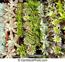 Succulents or Cacti - An assortment of succulent or cacti ...