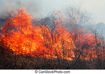 suchý, pastvina, hořící, pramen, les, den, energický, dech