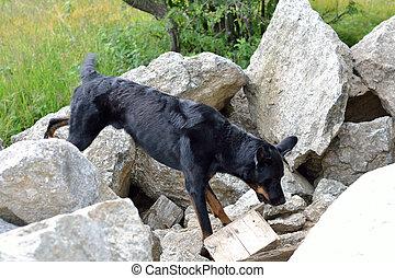 Suchhund spuert verschuettete Person auf - Search dog feels...